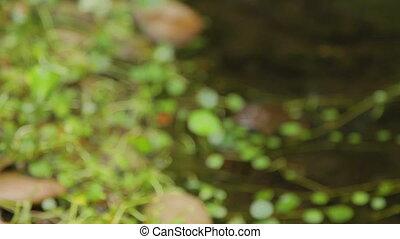 pierres, eau, grenouille, séance