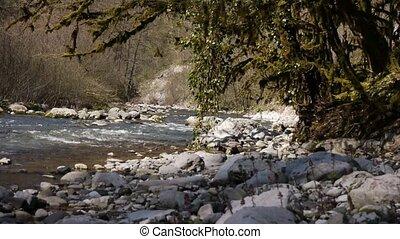 pierres, montagne, arbres, 4, gorge, rivière