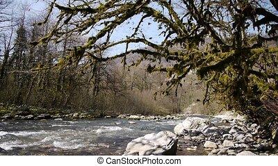 pierres, montagne, arbres, 6, gorge, rivière