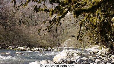 pierres, montagne, arbres, 7, gorge, rivière