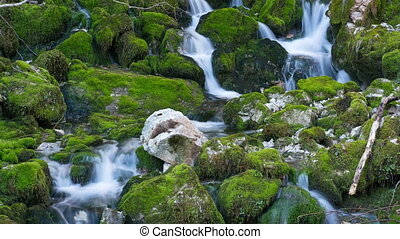 pierres, moussu, rivière, automne
