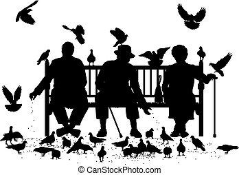 pigeon, feeders