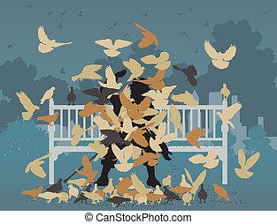 pigeon, parc