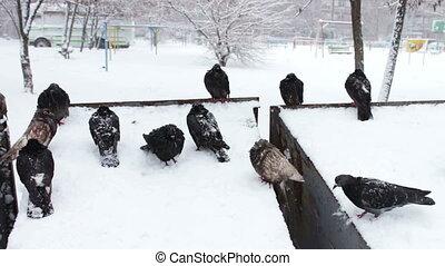 pigeons, neigeux, gris, surgelé, séance, déchets ménagers, boîte, lot