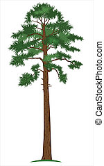 pine-tree, vecteur
