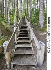 piste, bois, escalier, randonnée