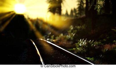 piste, ferroviaire, automne, coucher soleil, long, couleurs