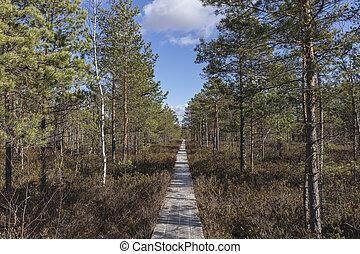 piste, marais, tard, planche, par, bois, automne, marche, jour