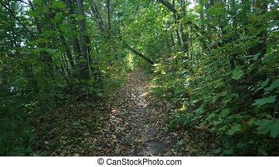 piste, mouvement, forêt