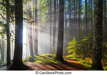 pistes, rayons soleil, long, randonnée