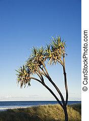 plage., arbre