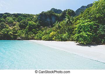 plage, beau, arbres, sablonneux, exotique, paume, vide