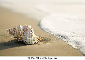 plage., coquille