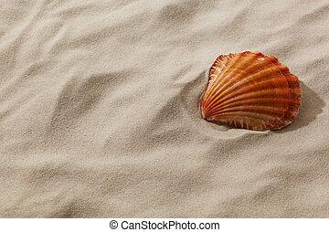plage coquille, sablonneux