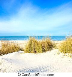plage, dunes, ciel, océan, sable, blanc, herbe