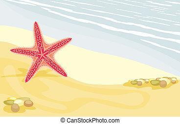 plage, etoile mer, sablonneux