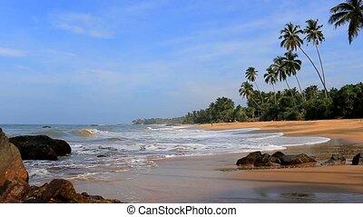 plage, exotique, océan, lanka, sri