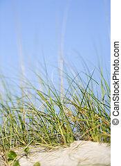 plage., herbe