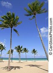 plage, jour, paume, floride, exotique, arbres