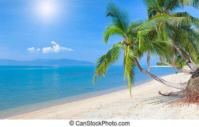 plage, noix coco, maeman, koh, exotique, thaïlande, palm., plage, samui