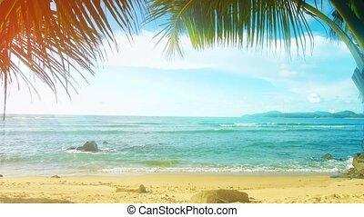 plage, paume, gens, ensoleillé, arbres, thaïlande, island., phuket, sans