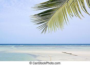 plage, paume, sable, arbre, exotique, beau