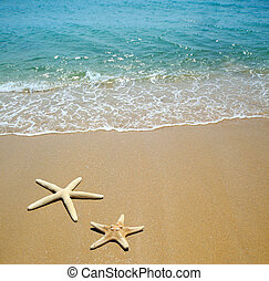 plage sable, etoile mer