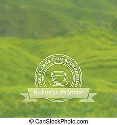 plantation, thé, vecteur, fond