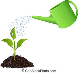 plante, arrosage, vert, jeune, boîte