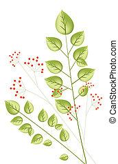 plante, baie rouge