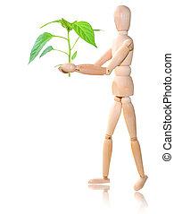 plante, blanc, bois, fond, homme