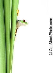plante, blanc, grenouille, isolé
