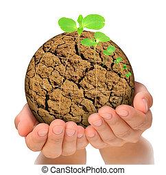 plante, concept, évolution, planète, desséché, croissant, mains, dehors