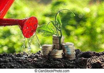 plante, concept, argent, pièces, croissance, croissant, dehors