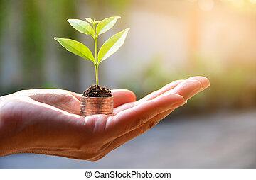plante, concept, financier, argent, main., pièces, croissant, sauver, concept.