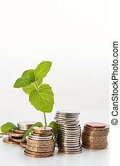 plante, concept, financier, argent, vert, croissant, monnaie