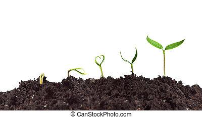 plante, croissance, germination