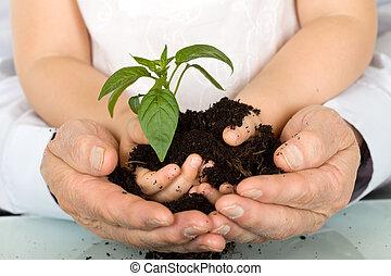 plante, enfant, adulte, tenant mains, nouveau