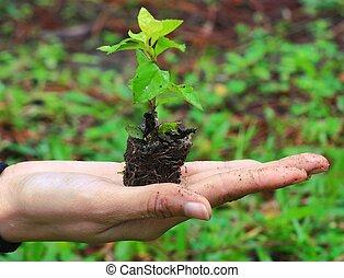 plante, femme, fond, nature, sur, tenant mains