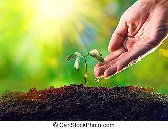 plante, fermier, lumière, arrosage, jeune, main, croissant, matin, plant.