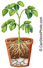 plante, fond, pot, isolé, vert