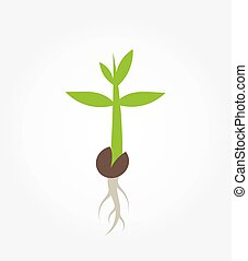 plante, germination, plant