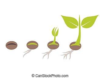 plante, germination