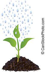plante, gouttes, vert, jeune, pluie