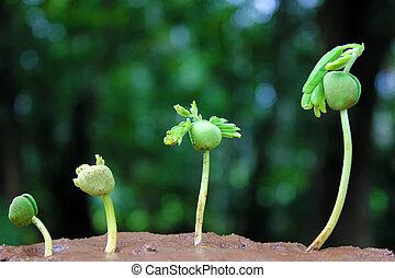 plante, growth-baby, usines