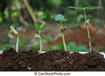 plante, growth-stages, croissant, usines