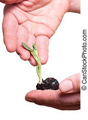 plante, hands.