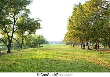 plante, herbe, naturel, polyvalent, lumière, espace public, parc, usage, arbre, matin, champ, arrière-plan vert, copie, ou, toile de fond