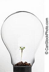 plante, intérieur, ampoule