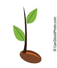 plante, jeune